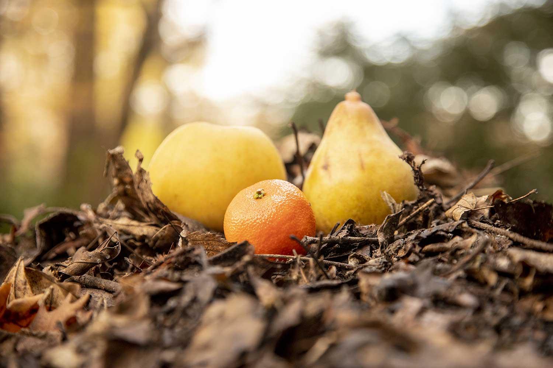 Épluchures de fruits dans le bioseau BicyCompost