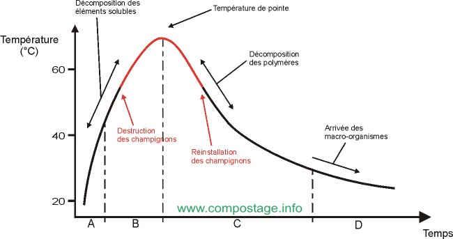 Graphe de la température dans le compost au cours du temps