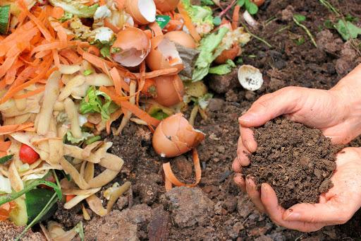 Ce qu'on peut mettre dans un compost